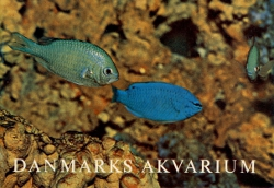 Danmarks Akvarium,